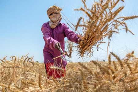 جهان در دو دهه آینده با کمبود غذا روبرو خواهد شد
